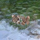 Srebrne drobne kolczyki kwiaty (2)